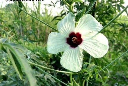 फूल ऐसे ही सुन्दर नहीं होते हैं
